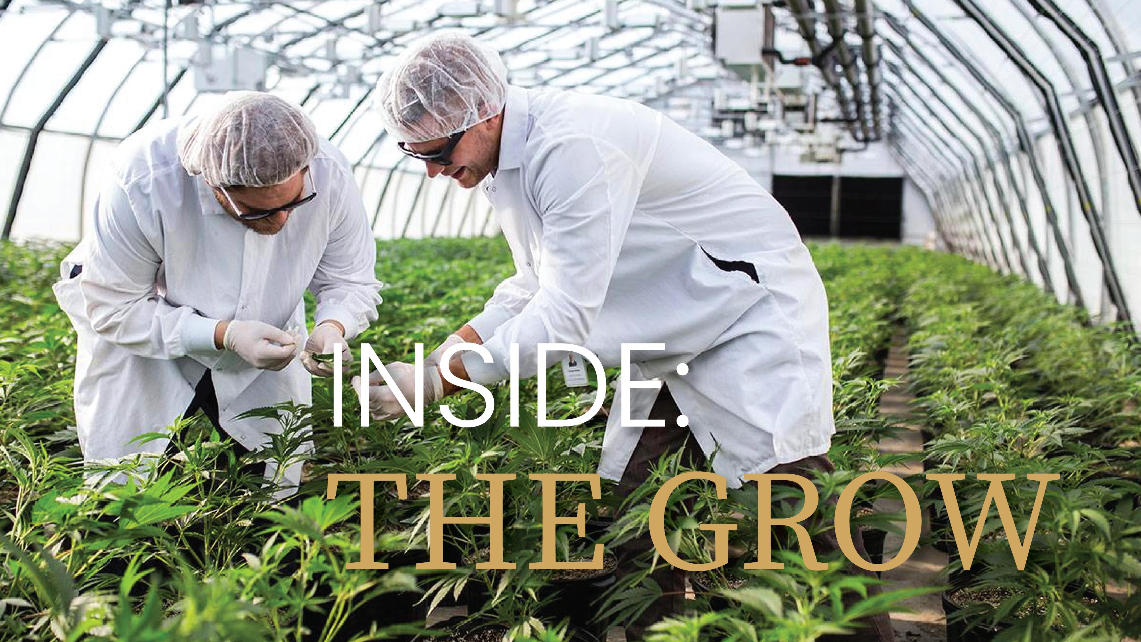 Inside The Grow