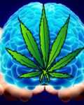 Strains That Make You Smarter