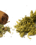 The Basics: Papers Or Blunts?