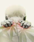 Best Strains To Ease Body Pain