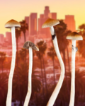 California's Psychedelics Bill Explained